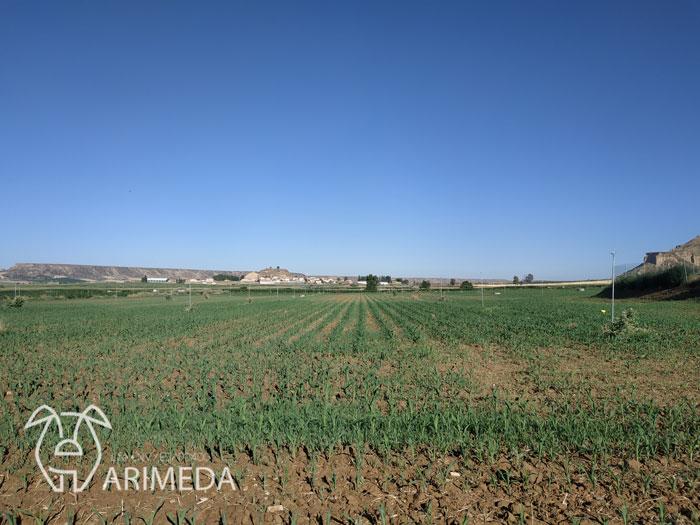 life-arimeda-castelflorite-goteo-19-08-08
