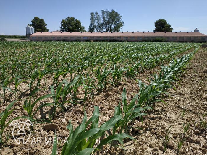 life-arimeda-castelflorite-goteo-19-08-12