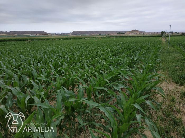 life-arimeda-castelflorite-goteo-19-08-19
